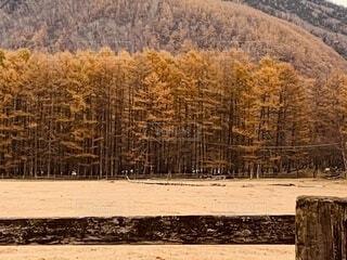 背景に山のある木の写真・画像素材[3712348]