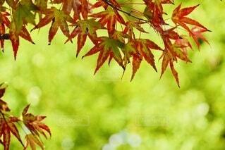 緑と赤の植物の写真・画像素材[3803203]