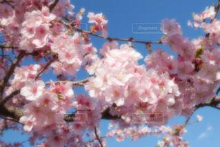花のクローズアップの写真・画像素材[4253135]