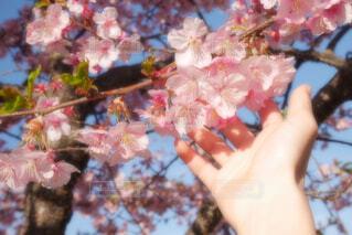花を持つ手の写真・画像素材[4253133]