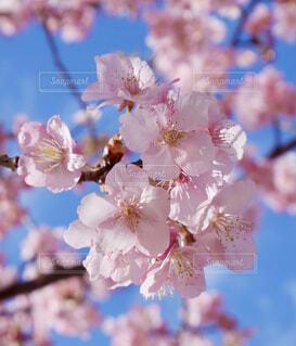 花のクローズアップの写真・画像素材[4271953]