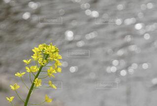 花のクローズアップの写真・画像素材[4292497]