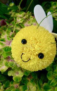 花のクローズアップの写真・画像素材[4295534]