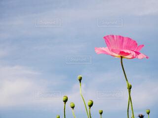 一輪の花の写真・画像素材[4312059]