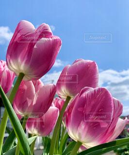 花のクローズアップの写真・画像素材[4333958]