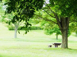 公園の大きな木の写真・画像素材[4409858]