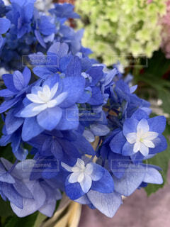 花のクローズアップの写真・画像素材[4556256]