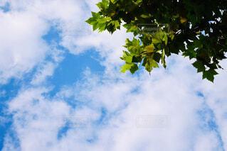青い曇り空の木の写真・画像素材[4607055]