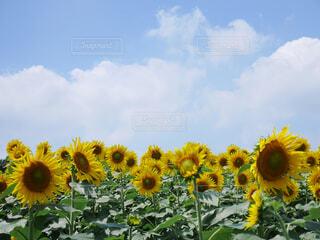 花のクローズアップの写真・画像素材[4607059]