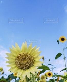 花のクローズアップの写真・画像素材[4660417]