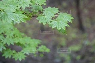森の中の緑の植物の写真・画像素材[4943405]