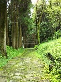森の中の木の写真・画像素材[3229922]