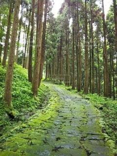 森の中の木の写真・画像素材[3229928]
