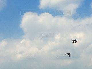 空,春,鳥,雲,ツーショット