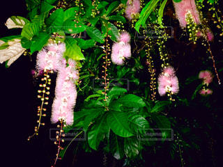 花の写真・画像素材[574677]