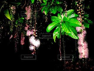 花の写真・画像素材[574678]