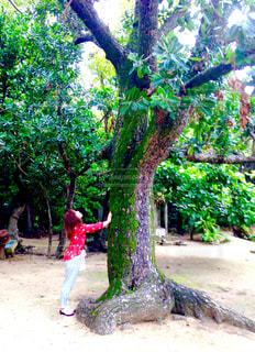 森の中の赤い木の女の子の写真・画像素材[1158974]