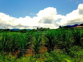 近くに緑豊かな緑のフィールドのの写真・画像素材[1158977]