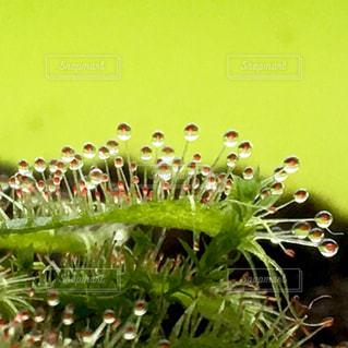 近くの花のアップの写真・画像素材[1217491]