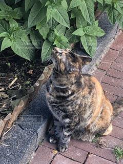 道端で出会った猫の写真・画像素材[3231456]