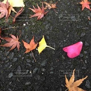 ハートと落ち葉の写真・画像素材[3726767]