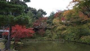 秋の京都の写真・画像素材[3726768]