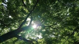 新緑の季節の写真・画像素材[3282039]