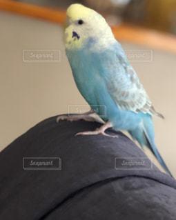 洗濯物の上に止まっている小鳥の写真・画像素材[3229946]