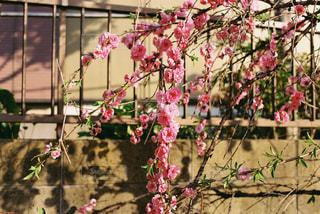 花のクローズアップの写真・画像素材[3230049]