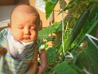 子ども,食べ物,風景,緑,野菜,寝る,人,眩しい,赤ちゃん,食品,幼児,少年,食材,草木,フレッシュ,ベジタブル,きゅうり,配置