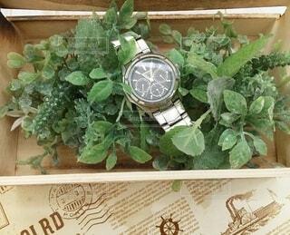 時計と緑の写真・画像素材[3782781]