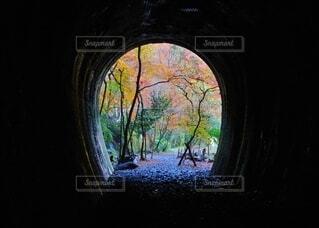 暗闇の中に紅葉トンネルの写真・画像素材[3783154]