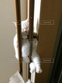 カーテンレールの上でお昼寝する猫の写真・画像素材[3231266]
