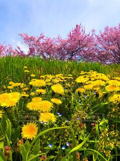 春の写真・画像素材[3231631]