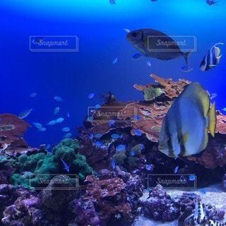 魚のダンスの写真・画像素材[3234771]
