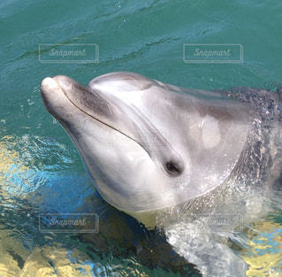 イルカのアップの写真・画像素材[3246771]