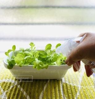 食べ物,野菜,食品,食材,フレッシュ,ベジタブル,水耕栽培,霧吹き,キッチン菜園,ミックスリーフ