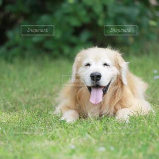 笑顔のリノさんの写真・画像素材[3235493]