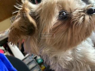 犬のクローズアップの写真・画像素材[3237052]