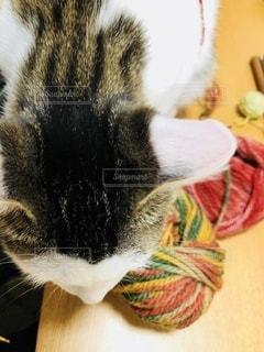 毛糸玉とまんまるあたまの写真・画像素材[3398331]
