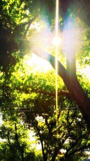 光と影の写真・画像素材[4447405]