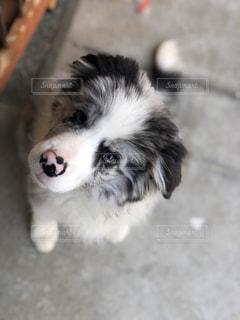 犬のクローズアップの写真・画像素材[3236697]