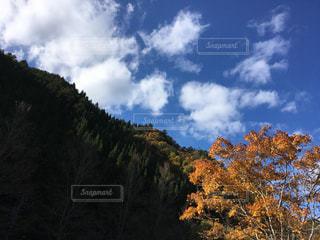 紅葉と空の写真・画像素材[3237852]