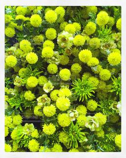 花の写真・画像素材[597546]