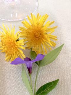 花の写真・画像素材[597557]