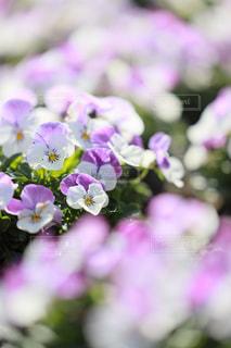 花のクローズアップの写真・画像素材[3247266]