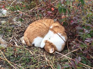 線路脇でまるまる猫の写真・画像素材[1265204]