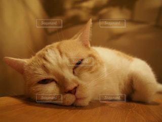 ぐでーんとした猫の写真・画像素材[1265643]