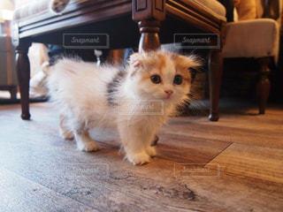 木製の床の上に座っている猫の写真・画像素材[1266487]