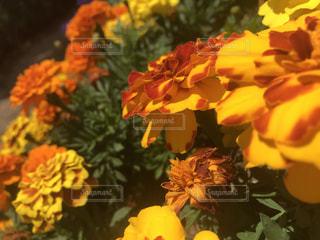花のクローズアップの写真・画像素材[3252508]